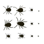 Types of Ticks – Learn About the Different Tick Types