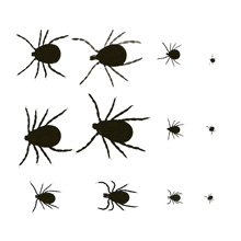 Types of Ticks - Learn About the Different Tick Types