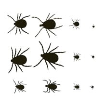 of Ticks - Learn About the Different Tick Types