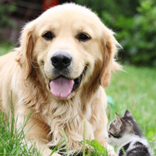 Tick Repellent for Dogs and Cats