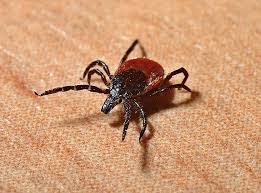 tick bite diarrhea