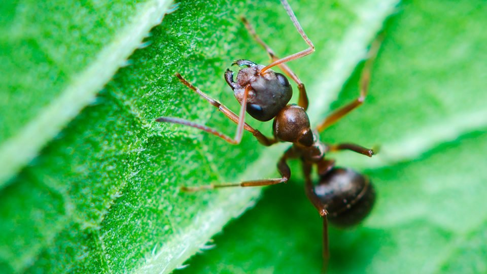 How to Get Rid of Ants Forever - Complete Guide to Ant Control