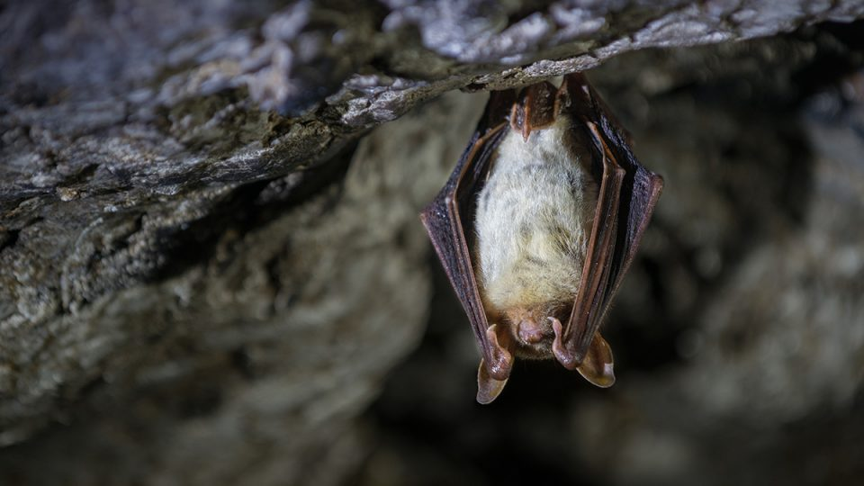 How to Get Rid of Bats Forever - Complete Guide to Bat Control