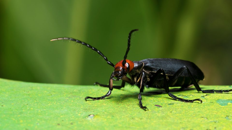 How to Get Rid of Beetles Forever - Complete Guide to Beetle Control